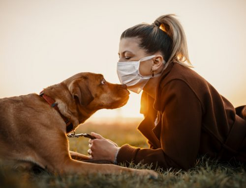Questions About COVID-19 and Your Pet? We Have Answers